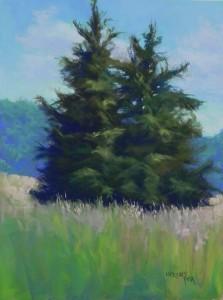 Evergreens Study, 16 x 12 Pastelbord